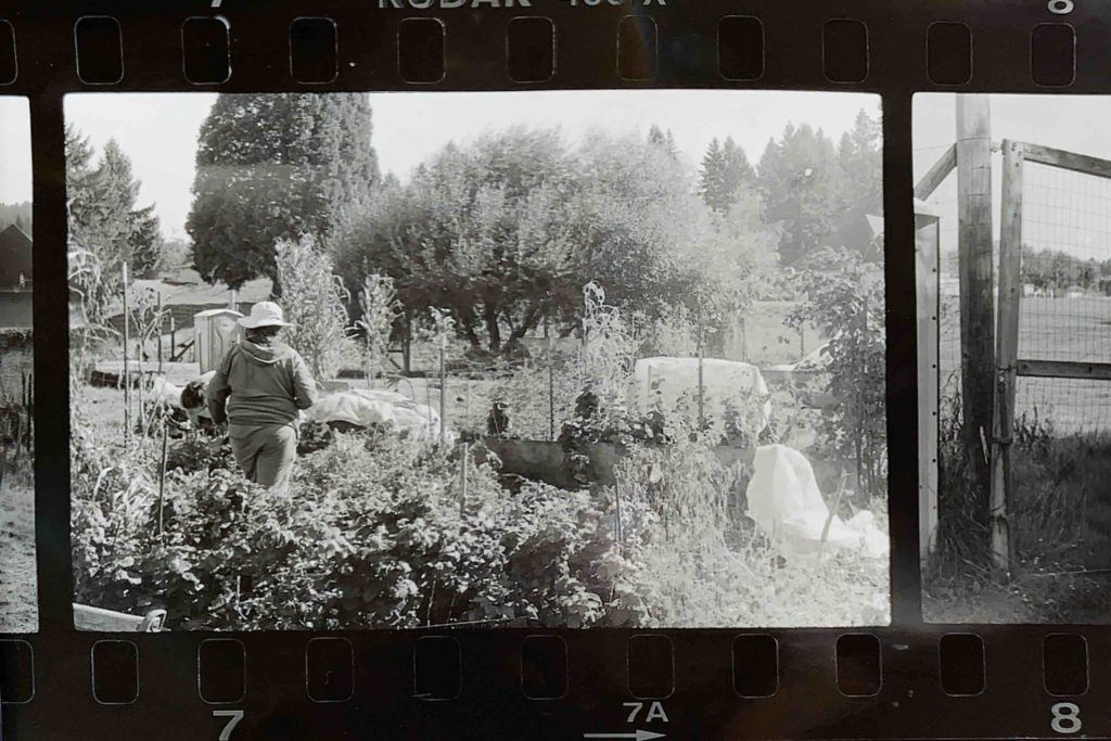 black and white photo of a person wearing a sun hat walking toward a garden bed.