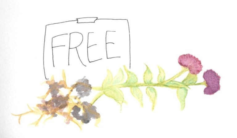 """Two pink zinnias with long stems lying on their side next to a sign that says """"free"""""""