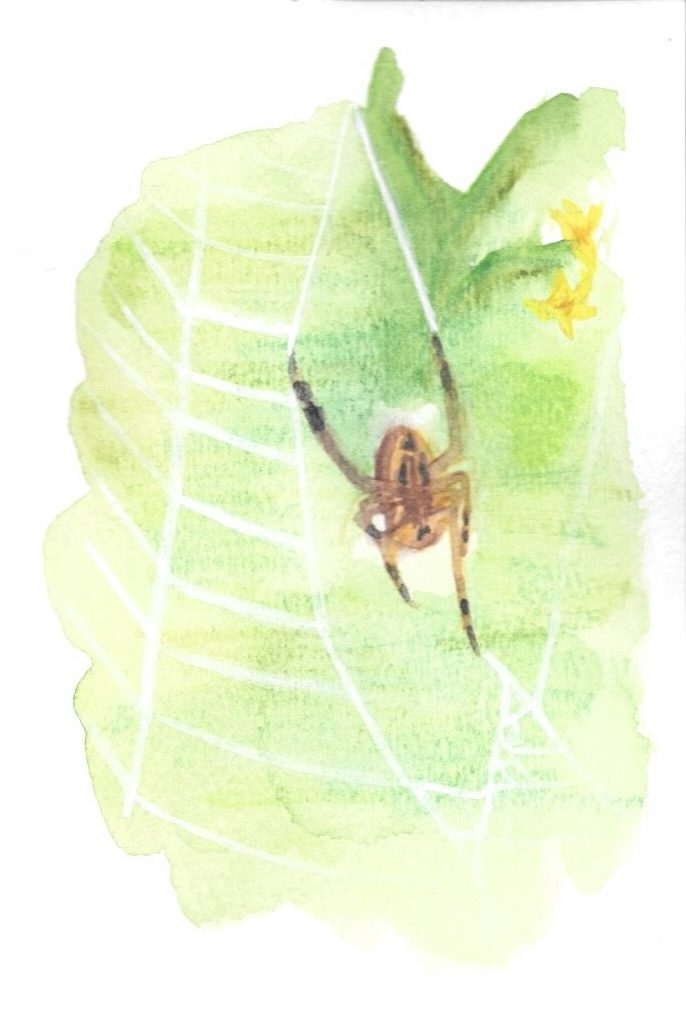 A brown spider building a translucent web against a green leafy backdrop