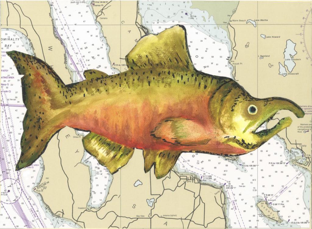 Painting of chinook salmon.